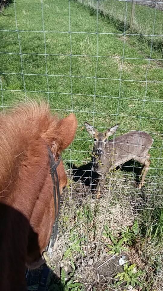 nø_dyr_hest