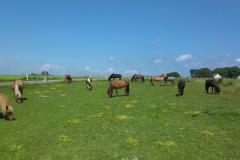 heste_1