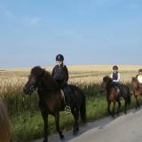 heste_9