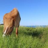 heste_7-kopi