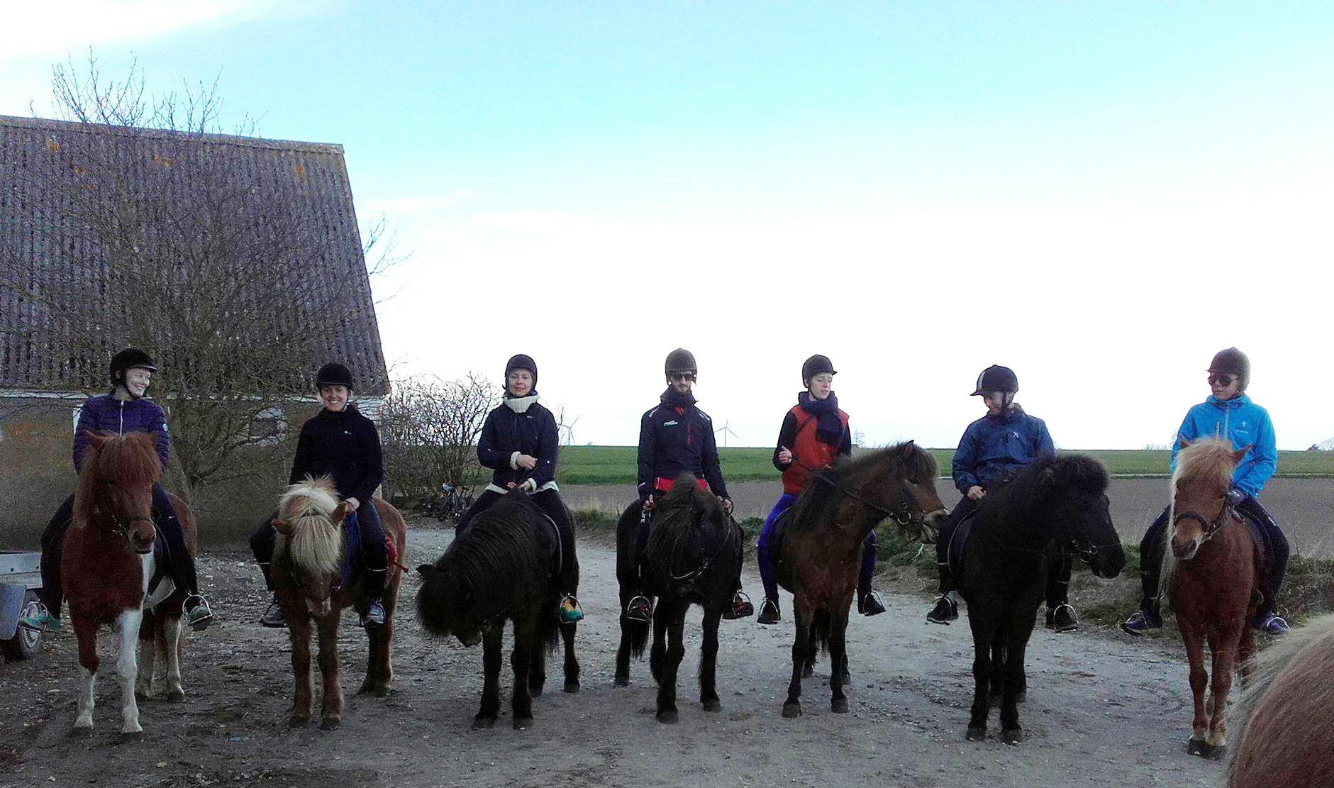 islands-heste