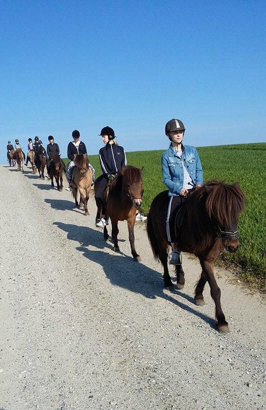 island-heste-noerreskiftegaard