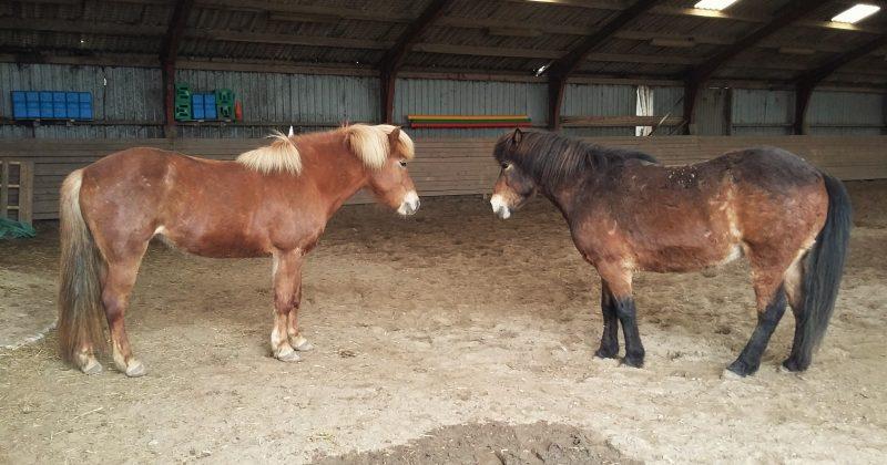 Nye heste på Nørreskiftegaard
